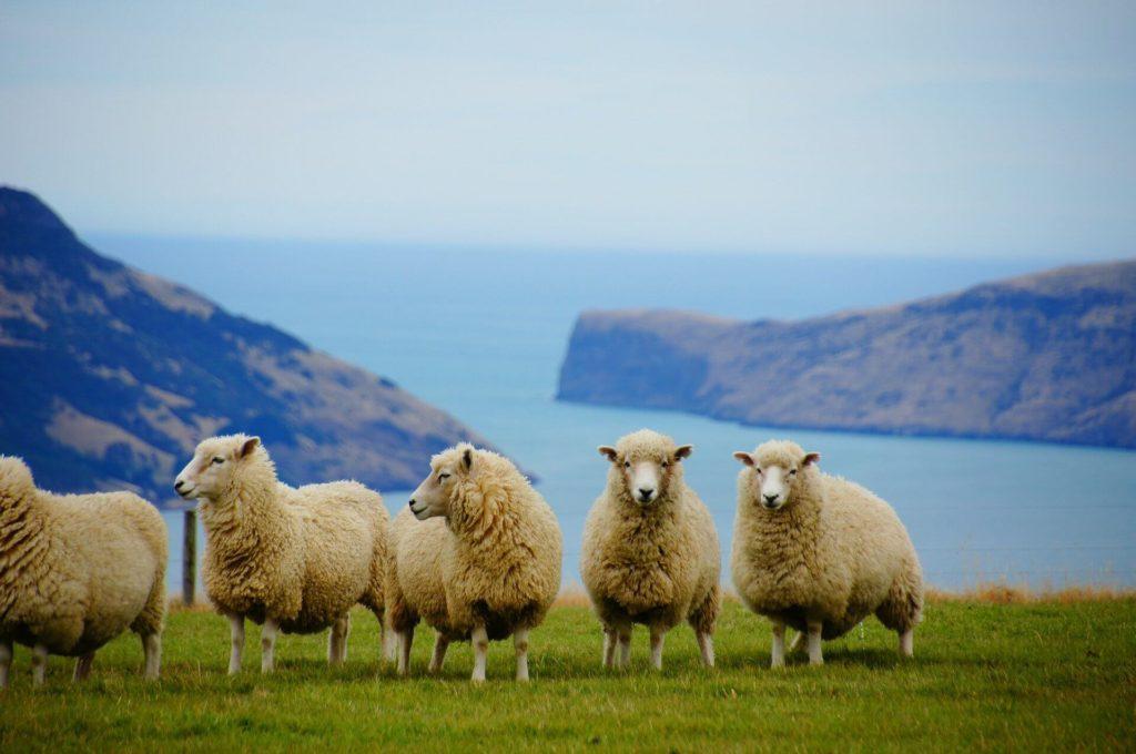 ニュージーランドワーホリのその後