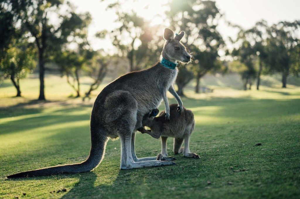 オーストラリアワーホリのその後